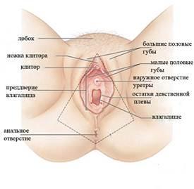 что означают жжения на входе во влагалище-шф1